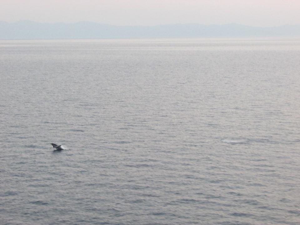 Делфин на път за Лимнос