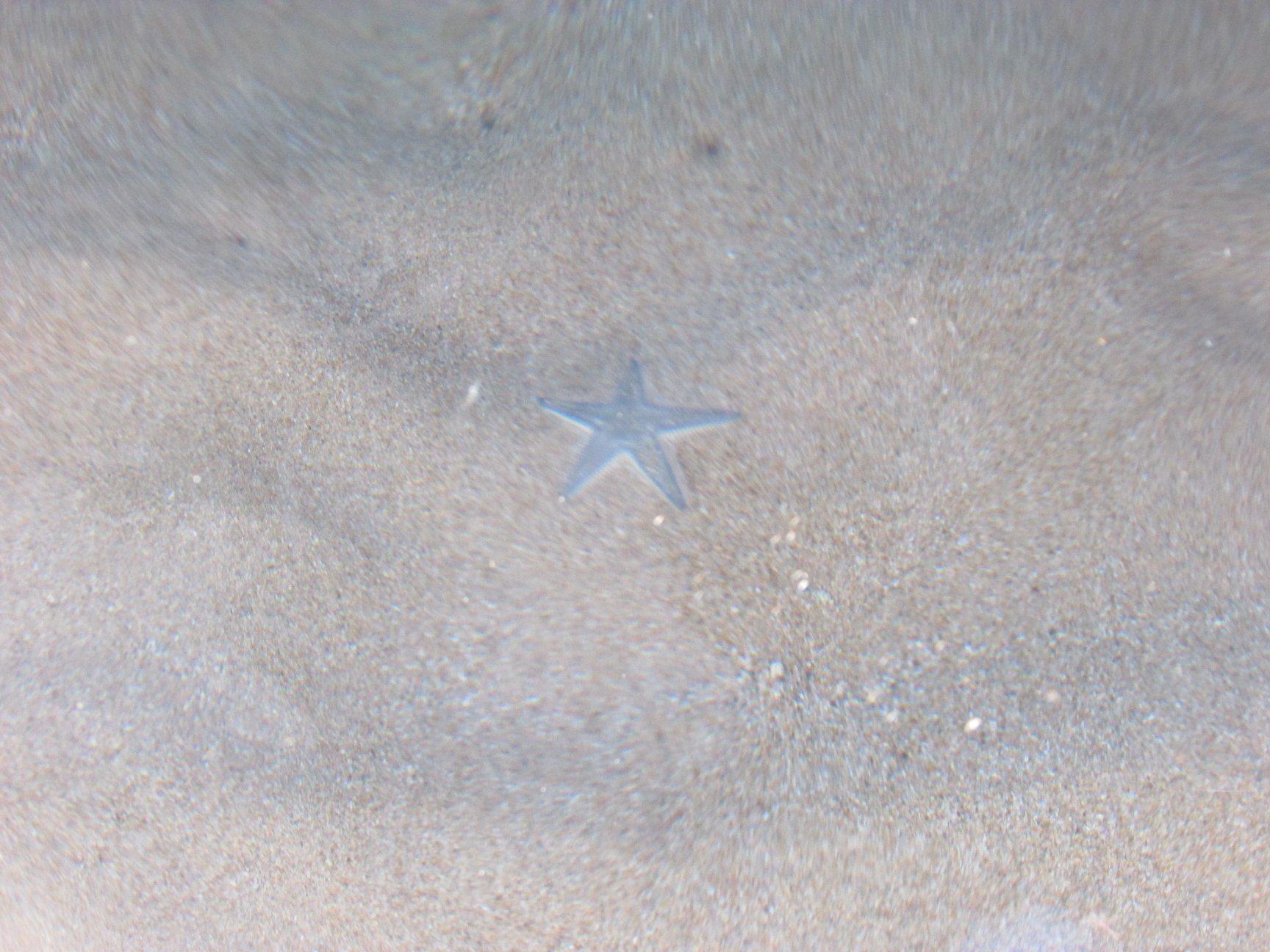 морска звезда на плажа