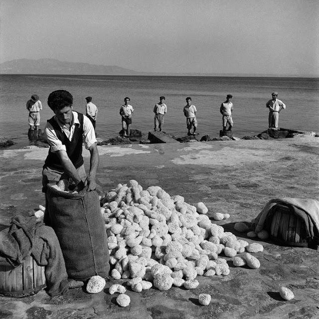 сортиране на морски гъби