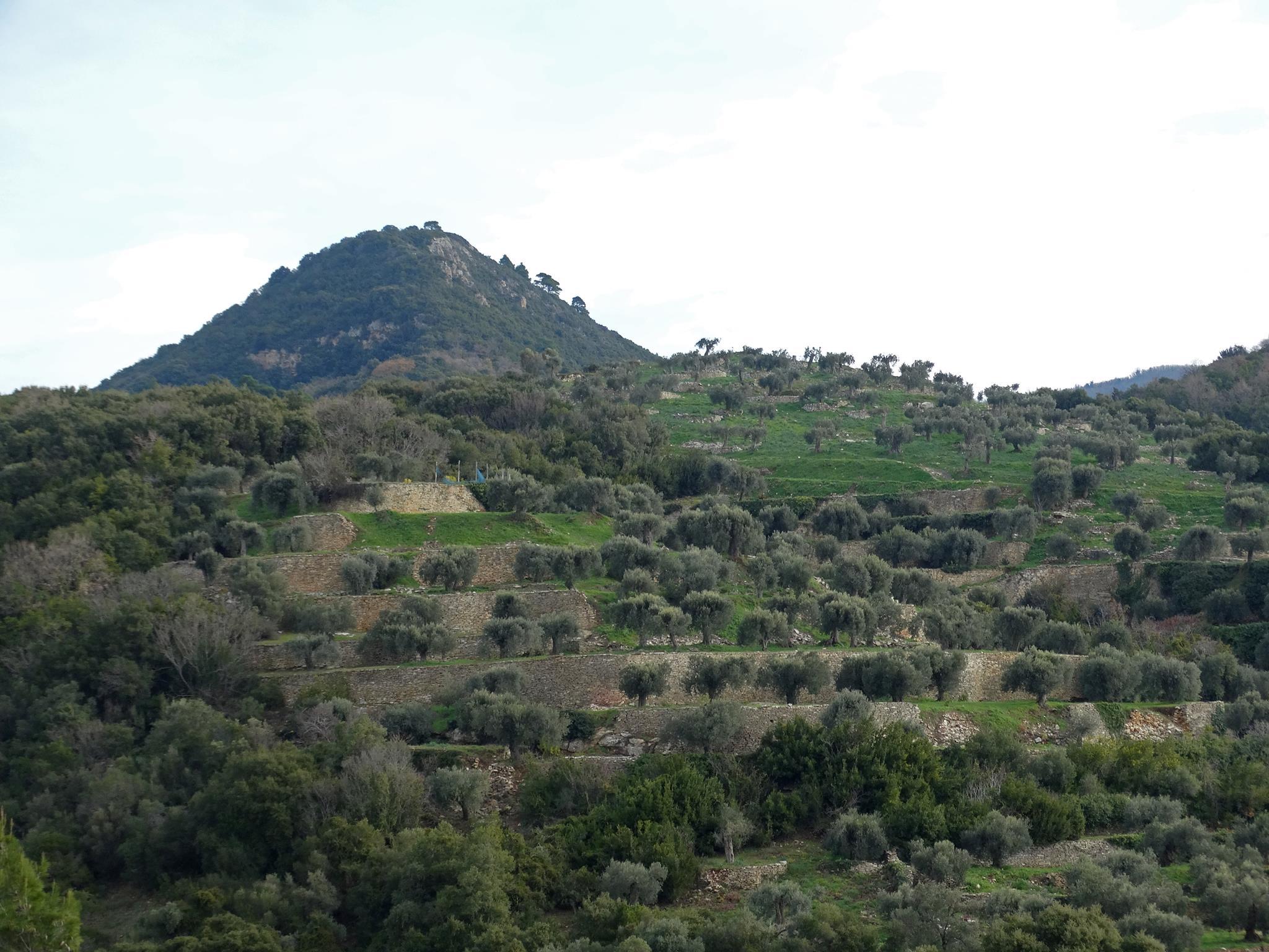 маслинени горички на Атон
