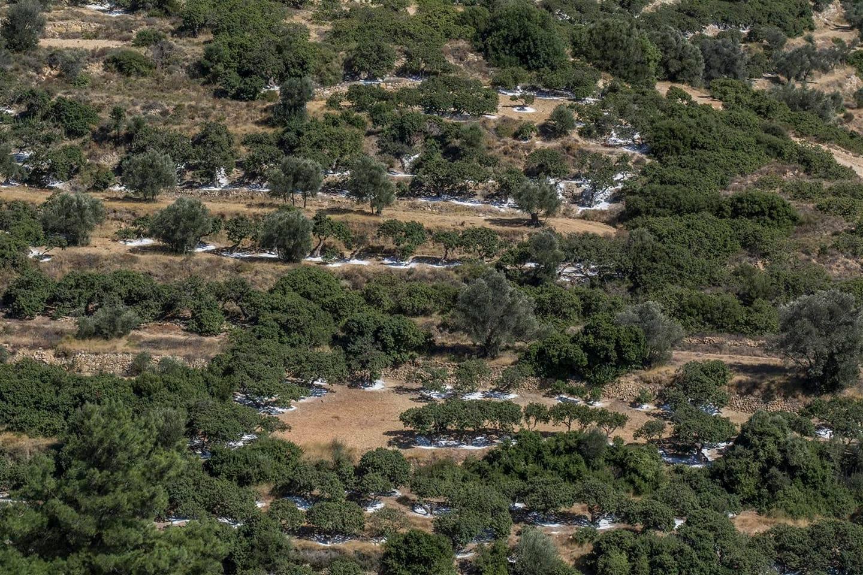 Мастихови дървета на Хиос, Гърция