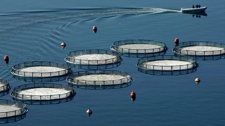 Развъдници на риба в Гърция